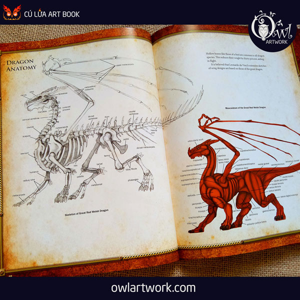 owlartwork-sach-artbook-concept-art-dracopedia-guide-to-drawing-dragons-of-the-world-12