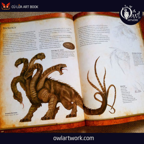 owlartwork-sach-artbook-concept-art-dracopedia-guide-to-drawing-dragons-of-the-world-16