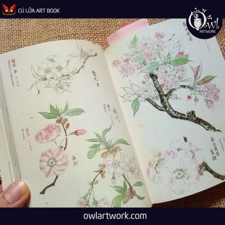 owlartwork-sach-artbook-concept-art-flora-sketches-vang-13