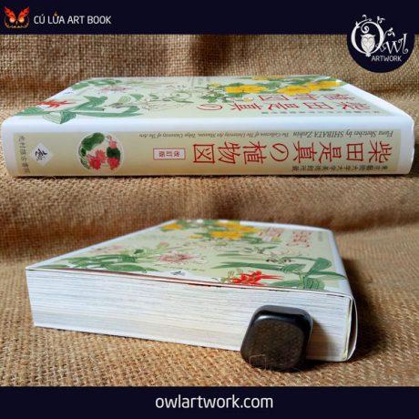 owlartwork-sach-artbook-concept-art-flora-sketches-vang-18