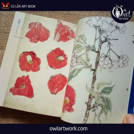 owlartwork-sach-artbook-concept-art-flora-sketches-xanh-3